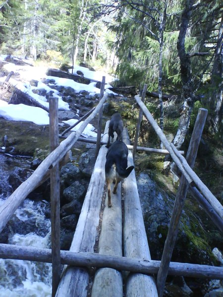 10 vovvarna över stockbron