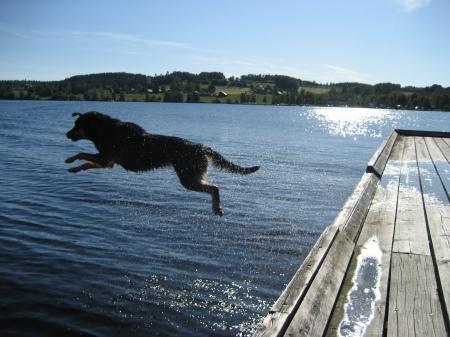 nicki hoppar