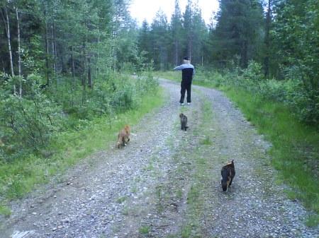 04 jussie och katterna