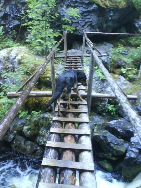 06 nicki på första bron