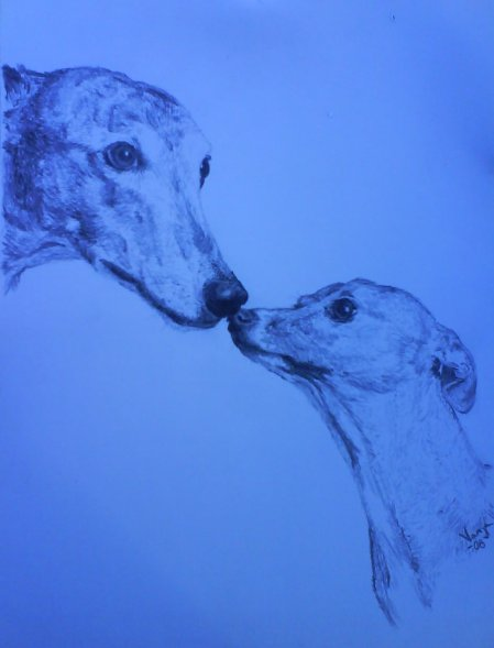 08 greyhound och italienare