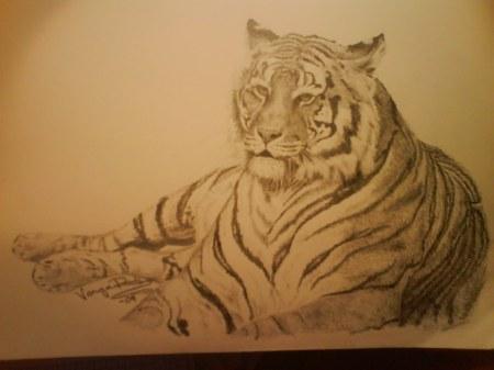 10 liggande tiger