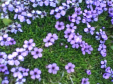 14 fina lila blommor
