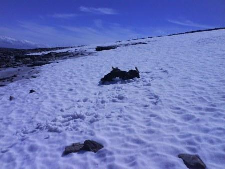 20 nicki snö