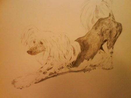teckning kinesisk nakenhund