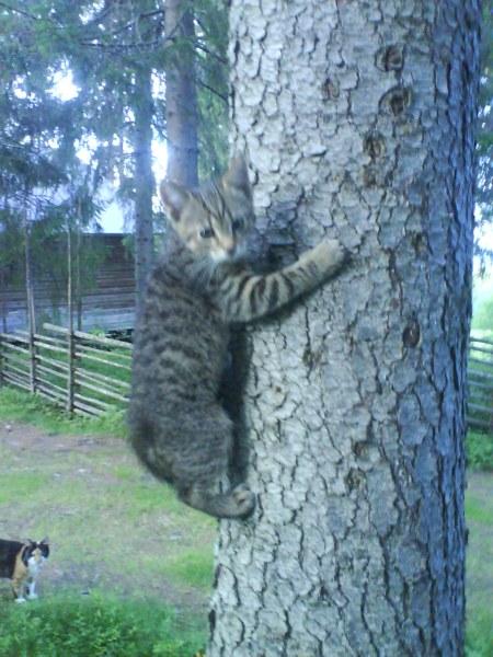 08 felix i trädet