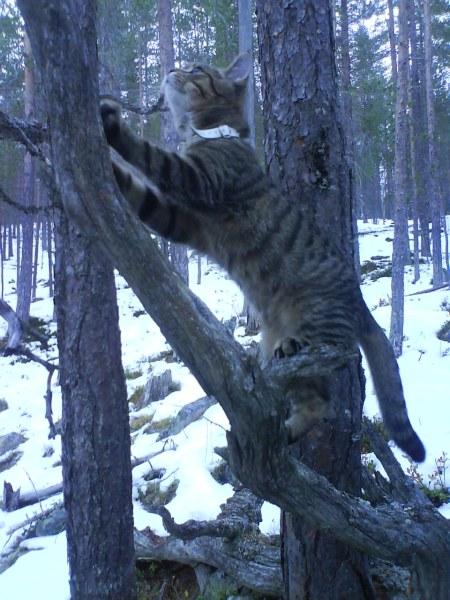 34 felix hitta ett träd